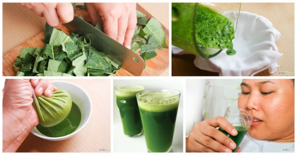 New Study Reveals That Papaya Leaf May Be a Powerfull Anti-cancer Food
